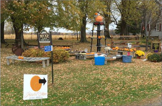 Pumpkin sales a longstanding tradition for Micke family